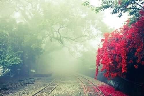 Des rails dans une forêt calme