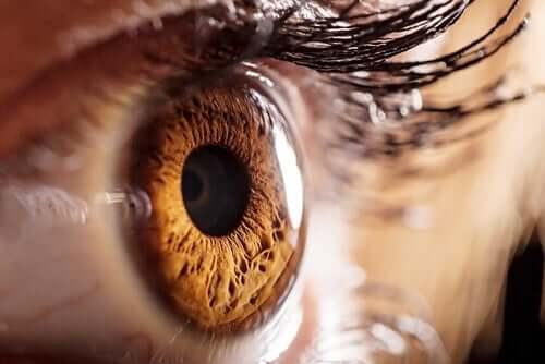 L'optographie, une méthode pour identifier les assassins via leurs yeux