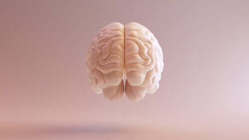 Cortex préfrontal dorsolatéral : fonctions principales