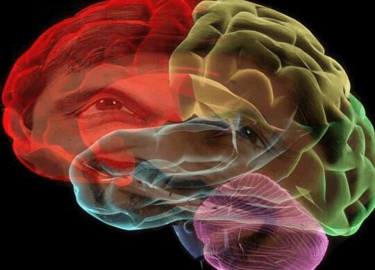 Le cerveau fonctionne d'une telle manière que nous oublions nos rêves