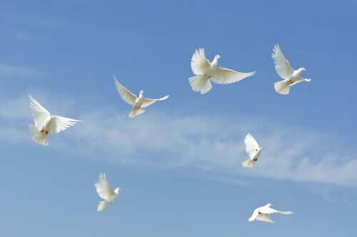 Le prince et les colombes : une des fables chinoises qui font réfléchir