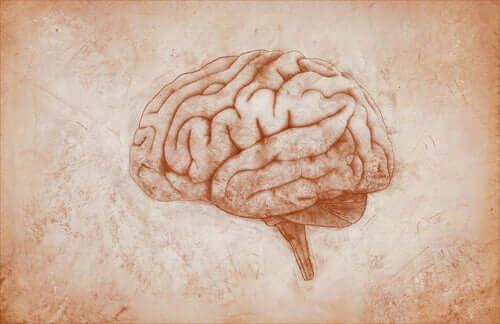 Le dessin d'un cerveau