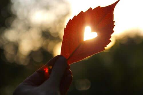 L'amour représenté par un coeur formé dans une feuille