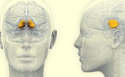 La substance noire dans le cerveau