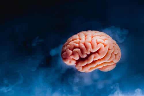 Description de l'anatomie du cerveau