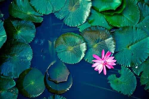 L'étang, une ancienne légende zen