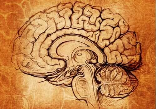 Le noyau lenticulaire, le centre de la motivation et de l'apprentissage