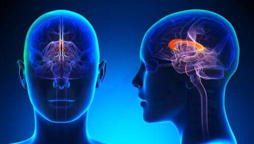 Les actions du cerveau gaucher