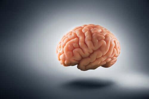 La pauvreté a une incidence sur le cerveau