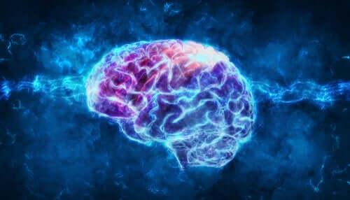 Un cerveau recouvert de lumière