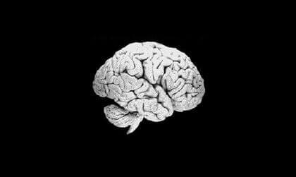 Une imagerie du cerveau humain