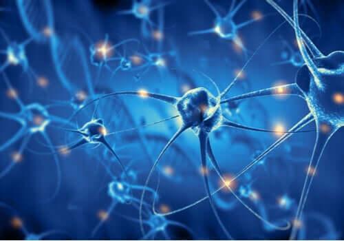 L'effet de l'exercice sur les neurones