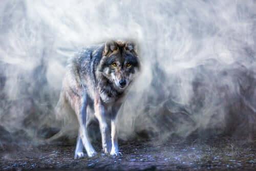La légende du loup Astur, une histoire sur l'équilibre
