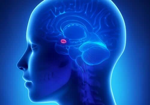 L'amygdale cérébrale et son rapport à l'anxiété