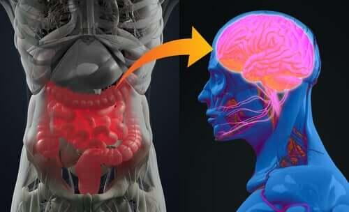 La digestion mentale, ou la relation entre le cerveau et l'intestin