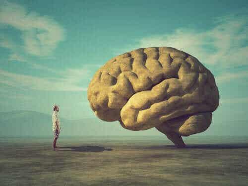 Le cerveau moral : la base neurale de l'éthique et des valeurs humaines