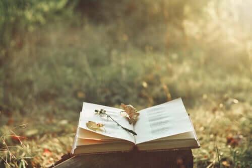 Un livre ouvert dans la nature.