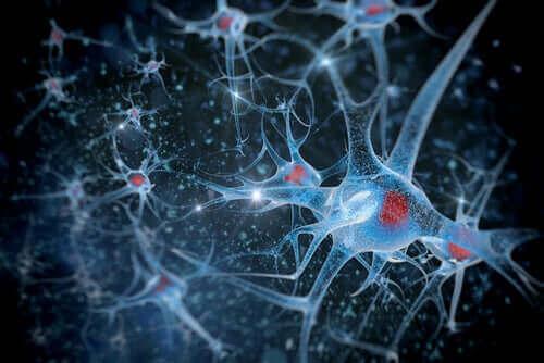 La synchronisation neuronale en cours