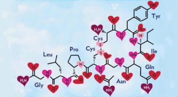 Le cerveau mental et l'ocytocine