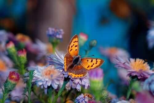 La plus belle fleur du jardin, une histoire japonaise
