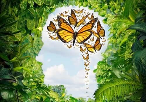 Des papillons dans l'esprit représentant l'absence de chaos