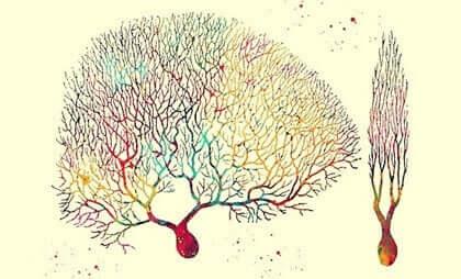 Les neurones de Purkinje, des cellules énigmatiques