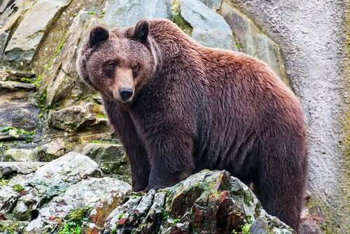 Petite, Atalante a été recueillie par une ourse