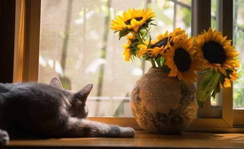 La tristesse et la frustration d'un chat à la maison
