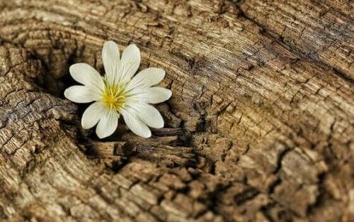 une fleur dans un tronc représentant la résilience en temps de coronavirus
