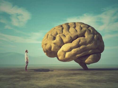 Un homme face à un cerveau