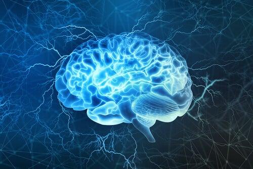 Un cerveau stimulé en image