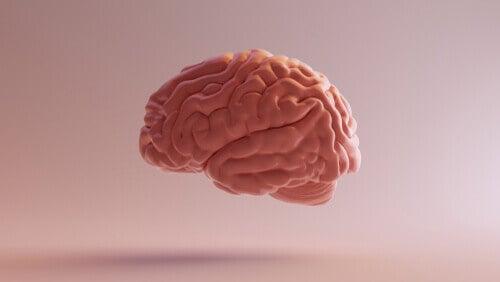 Le diencéphale dans le cerveau
