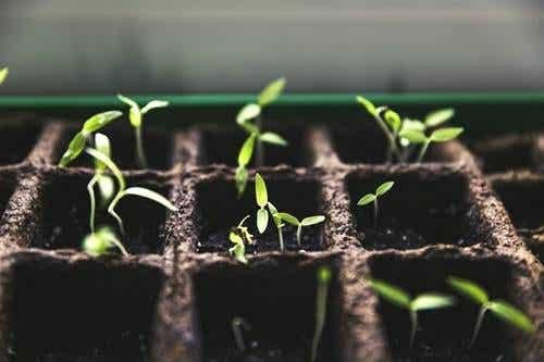 Cultiver un potager pendant la pandémie, plus qu'une mode
