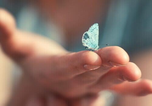 Un papillon bleu posé sur une main