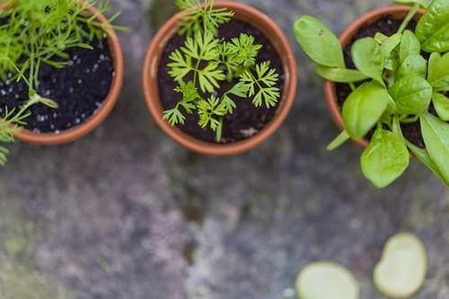 Des plantes dans un potager
