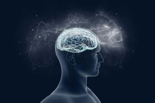 Un cerveau illuminé