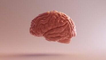 Cortex associatif : caractéristiques et fonctions