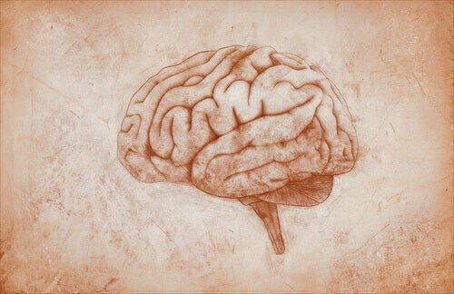 Un dessin de cerveau