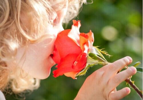 La psychologie des odeurs : la bonne odeur de la rose.