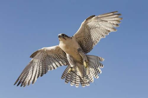 Le faucon qui ne pouvait pas voler, une histoire zen sur l'autonomie