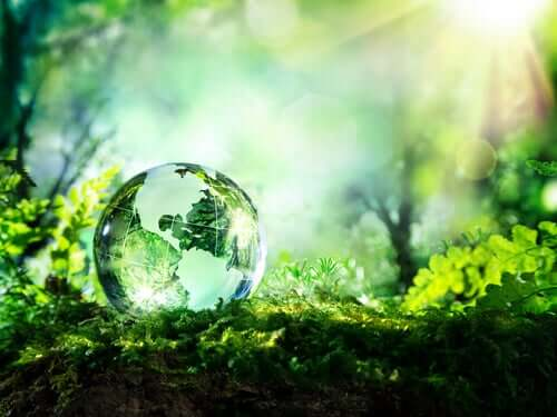 Parmi les principes pour la vie des natifs américains figure le fait de prendre soin de la Terre