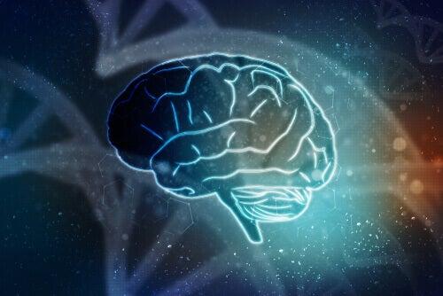 Une illustration d'un cerveau