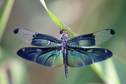La belle métaphore de la libellule et des cycles de la vie