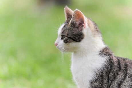 Le chat représente la sérénité.