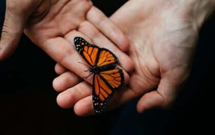 Des mains tenant un papillon