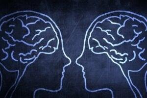 Le cerveau social : pourquoi est-ce un avantage évolutif ?