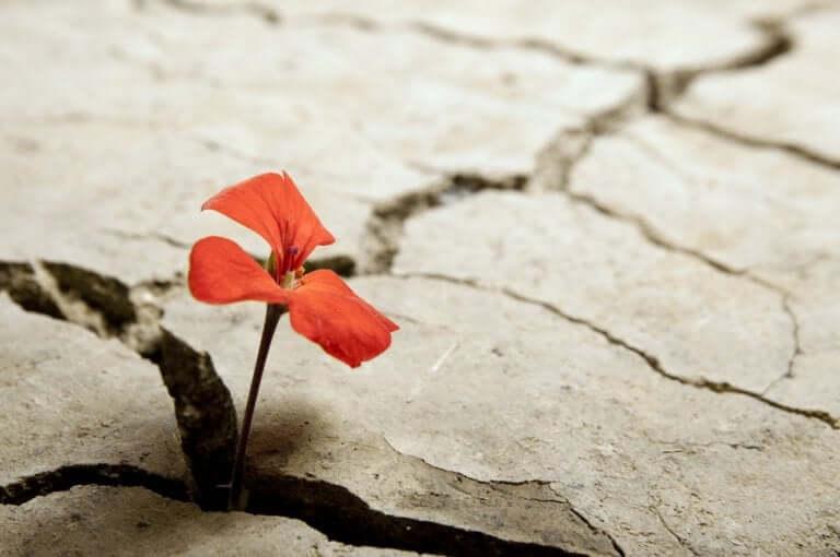 Les opportunités sont cachées dans les fissures des difficultés
