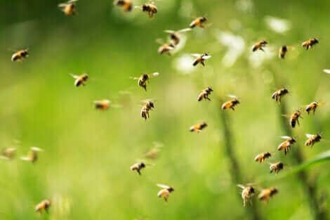 Apiphobie : la peur des abeilles.