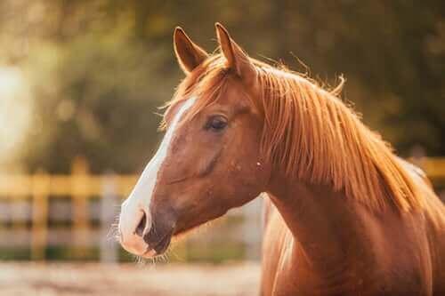 Hypophobie ou peur des chevaux : causes et traitement