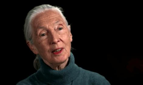 Il s'agit de Jane Goodall.